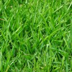 Why Organic Lawn Care Is the Best Option